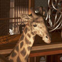 Kopf der Giraffe