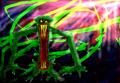 Thumbnail for version as of 02:24, September 12, 2011