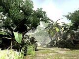 Mitis Forest