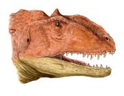Majungasaurus -Majunga