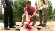 Dexter extracts an arm from an alligator