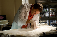 Dexter looks for clues on angel wings