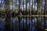 Florida Swamp