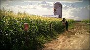 Norm's cornfield