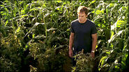 Dexter finds pot farm in a corn field