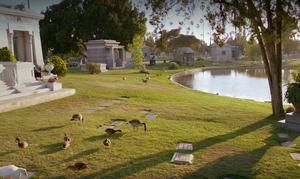 Briar Cemetery 5