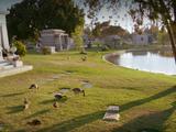 Briar Cemetery