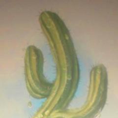 Raindrop Cactus