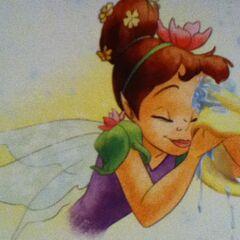 Fairy hygiene