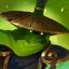 Ninjafrog nature