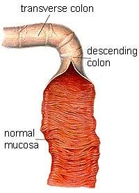 Mucosal system