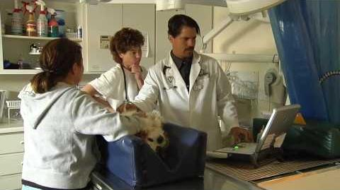 Urinary Tract Infections in Dogs (UTI's)