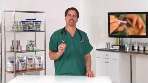 Canine Dental Taking Care of Your Dog's Teeth - VetVid Episode 001