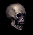 Skull Portrait.png