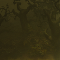 The Festering Woods.png