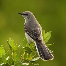Bird animagus