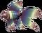 RawRainbowFish