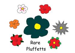Rare Pluffetts