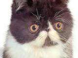 Kitty Amazing (Character)