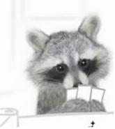 Raccon cute