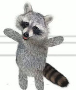Raccoon 4