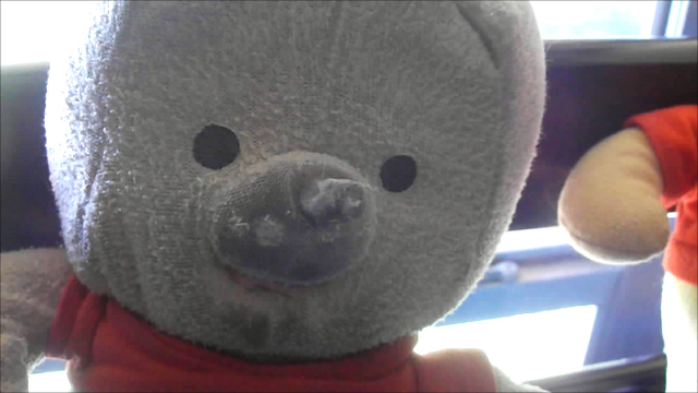 File:Teddy.png