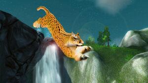 Gepard Jaspin