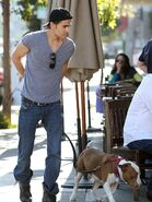 Paul wesley walking dog