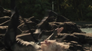 180px-Cashmere-death
