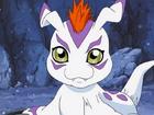 Gomamon avatar
