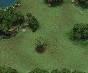 Bosque indigena