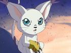 Tailmon avatar
