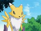 Renamon avatar