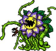 Blossod1