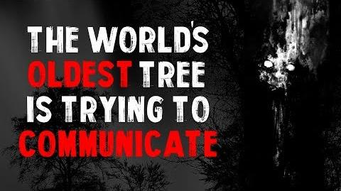 """The World's Oldest Tree Is Trying To Communicate"" Creepypasta"