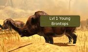 Lv 1 Young Brontops