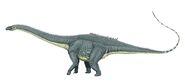 Diplodocus carng1DB