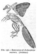 Sharp introgeologywbscott1897 archeopteryx