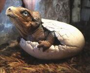 Protoceratops-hatching