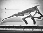 Corythosaurus1960s