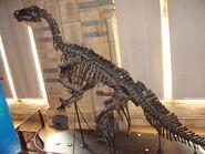 Iguanodon bernissartensis (replica) 001 - Natural History Museum of London