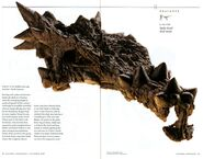 National-geographic-dinosaurs011