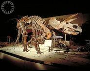 Triceratops 1963