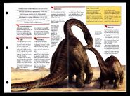 Wildlife fact file Apatosaurus inside