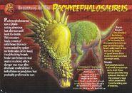 Pachycephalosaurus front