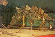 Stegosaurus-skeleton-AMNH-1000x679