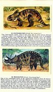 Ceratopsians Brooke Bond Picture Cards