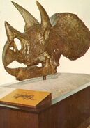 Triceratops1-700x1000