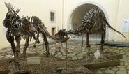 DinosaursCalci