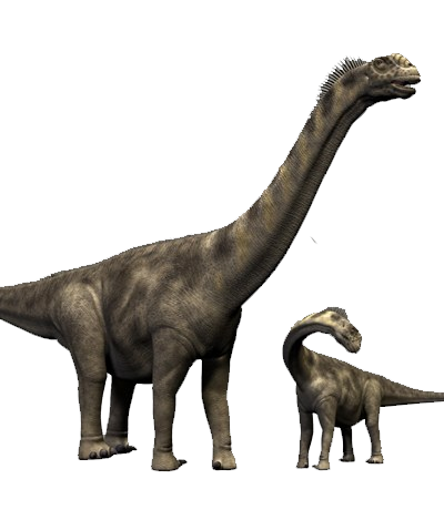 Camarasaurus was probably the most common sauropod dinosaur of the Late  Jurassic Morrison Formation in North America. This large 9c366e0e3136